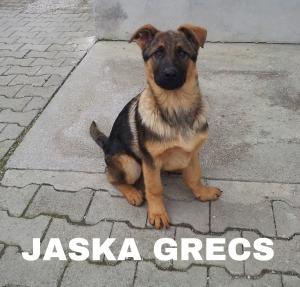 JASKA GRECS