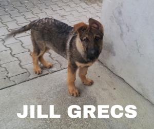 Jill Grecs